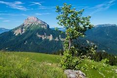 Pass of pravouta,saint pierre de chartreuse,isere,france. Park regional de chartreuse en isere royalty free stock photography