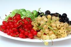 Passa de Corinto vermelha e groselha e gooseberries fotografia de stock