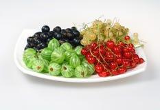 Passa de Corinto vermelha, groselha e gooseberries imagens de stock royalty free