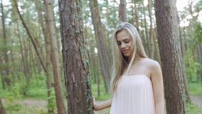 Passa gli alberi stock footage