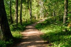 Passadiço de madeira na floresta Foto de Stock
