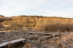 Passadiço de madeira sobre o pântano congelado Paisagem do inverno Foto de Stock
