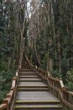 Passadiço na floresta imagens de stock royalty free