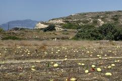 Passados melancias ao fim de setembro no Rodes Imagem de Stock