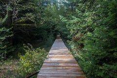 Passage couvert au lac Coldwater Photos libres de droits