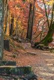 Passage couvert avec Autumn Leaf coloré Photos stock