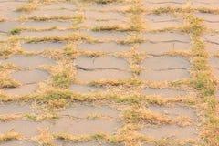 Passage couvert avec l'élevage d'herbe Images libres de droits