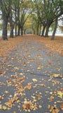 Passage couvert d'arbre Photo libre de droits