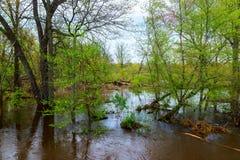 Passage couvert d'arbres inondé après la pluie images libres de droits