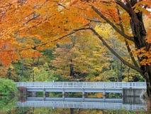 Passage couvert d'automne Photo stock
