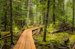 Passage couvert d'enroulement dans une forêt Photographie stock