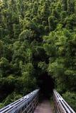 Passage couvert dans la forêt Photographie stock libre de droits