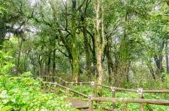 Passage couvert dans la forêt tropicale chez Ang Ka Doi Inthanon, Thaïlande Image stock