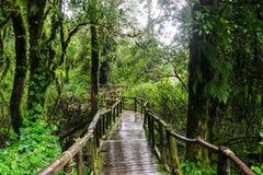 Passage couvert dans la forêt tropicale chez Ang Ka Doi Inthanon, Thaïlande Photos stock