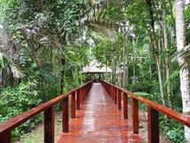 Passage couvert dans la jungle d'Amazone, Pérou Image stock