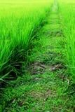 Passage couvert dans la rizière Image stock