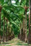 Passage couvert dans le jardin de palmier. Image stock