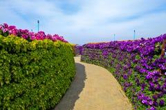 Passage couvert dans le jardin et le ciel bleu Photo stock