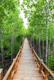 Passage couvert de Forest Wooden de palétuvier de baie de Thung Kha Chumphon, Thaïlande photos stock
