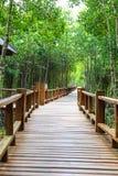 Passage couvert de Forest Wooden de palétuvier de baie de Thung Kha Chumphon, Thaïlande photographie stock libre de droits