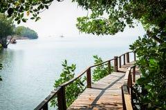 Passage couvert de Forest Wooden de palétuvier de baie de Thung Kha Chumphon, Thaïlande photos libres de droits