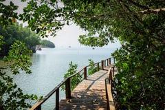 Passage couvert de Forest Wooden de palétuvier de baie de Thung Kha Chumphon, Thaïlande image stock