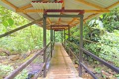 Passage couvert de jungle photo stock