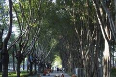 Passage couvert de parc Image stock