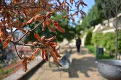 Passage couvert de parc d'automne Photo stock