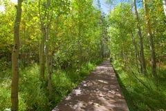 Passage couvert de passerelle en bois par la forêt de tremble Photo stock