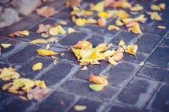 Passage couvert de tuile d'automne avec les feuilles jaunes humides Photo libre de droits