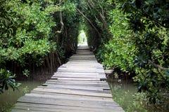 Passage couvert de tunnel de marais Photo stock