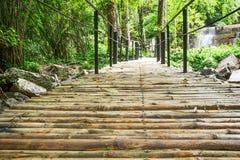Passage couvert en bambou dans la forêt Photographie stock libre de droits
