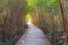 Passage couvert en bois à l'itinéraire aménagé pour amateurs de la nature Photo stock