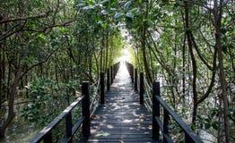 Passage couvert en bois dans la forêt de palétuvier Photo stock