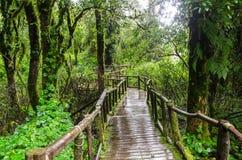 Passage couvert en bois dans la forêt tropicale chez Ang Ka Doi Inthanon, Thaïlande Image libre de droits