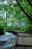 Passage couvert en bois par la forêt Photographie stock