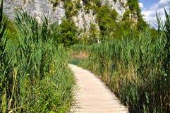 Passage couvert en bois par la haute herbe Photographie stock libre de droits