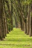 Passage couvert en parc Photographie stock