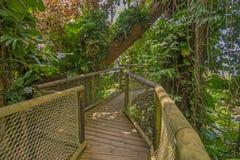 Passage couvert en parc de la Guadeloupe Images stock