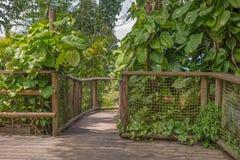 Passage couvert en parc de la Guadeloupe Image stock