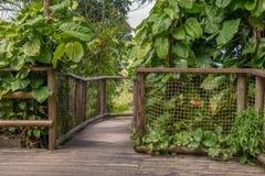 Passage couvert en parc de la Guadeloupe Images libres de droits