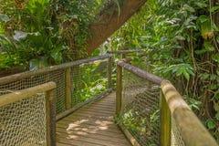 Passage couvert en parc de la Guadeloupe Photographie stock libre de droits