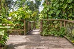Passage couvert en parc de la Guadeloupe Photos stock