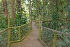 Passage couvert en parc de la Guadeloupe Photographie stock