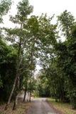 passage couvert entre la forêt Photographie stock