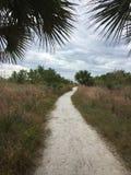Passage couvert entre le palmier Image libre de droits