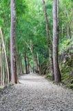 Passage couvert naturel Image libre de droits