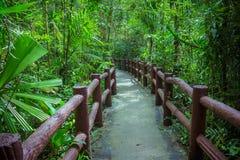 Passage couvert par les cimes d'arbre dans une forêt tropicale Image libre de droits