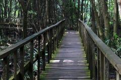 passage couvert/pont de 2km au centre Lagos Nigeris de conservation de Lekki Photographie stock libre de droits